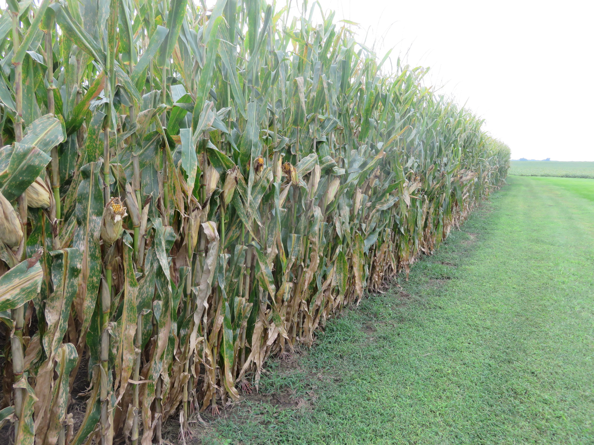 Picture of end rows