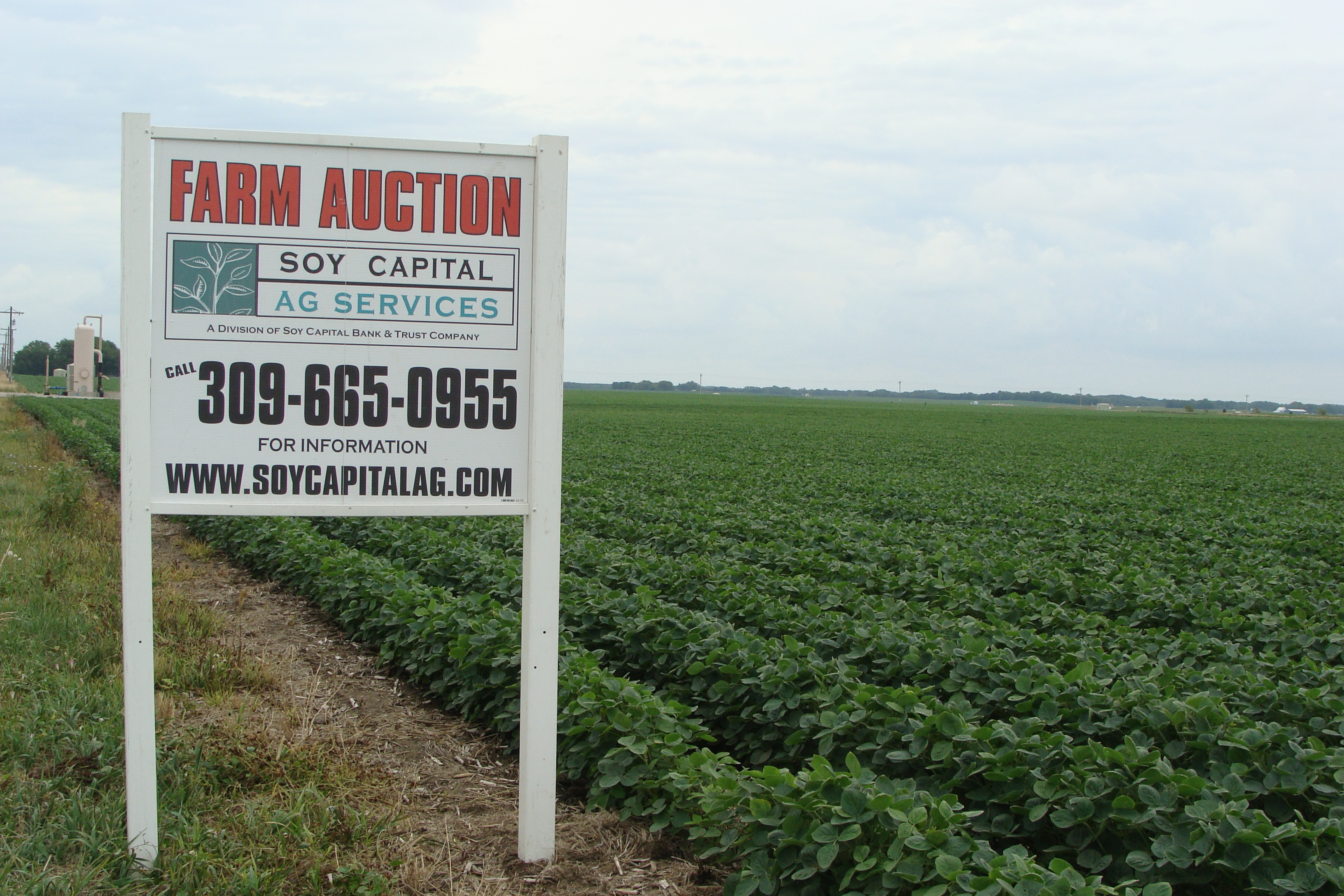 Picture of Webster Auction Sign