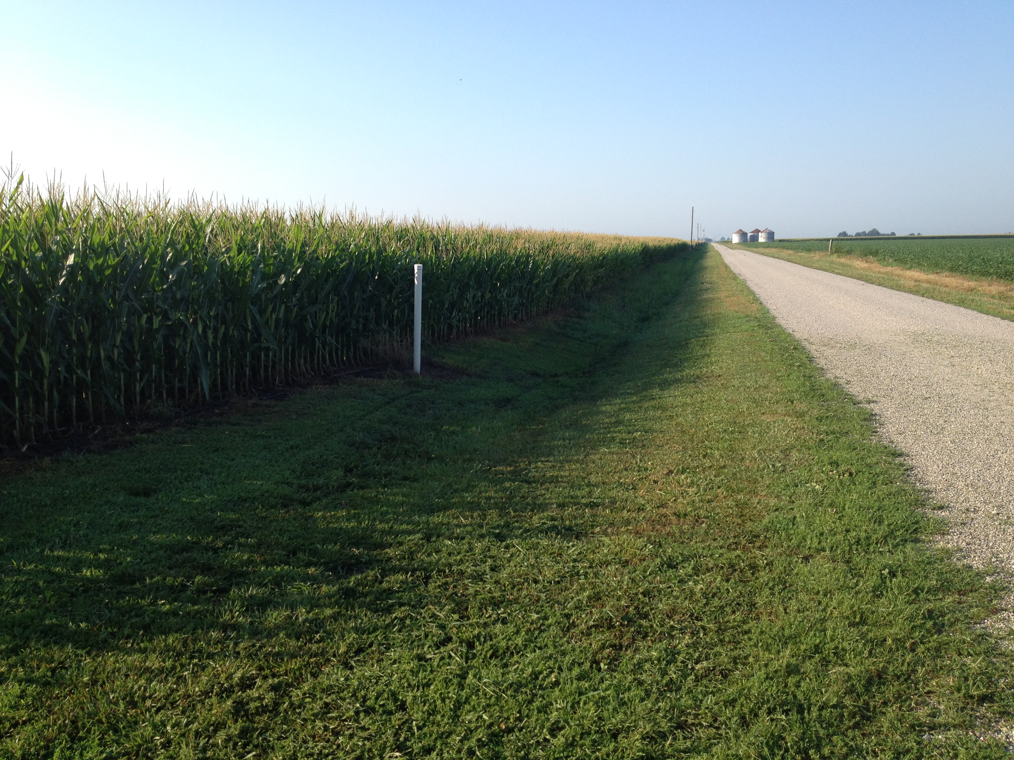 Picture of corn on Wallbaum farm