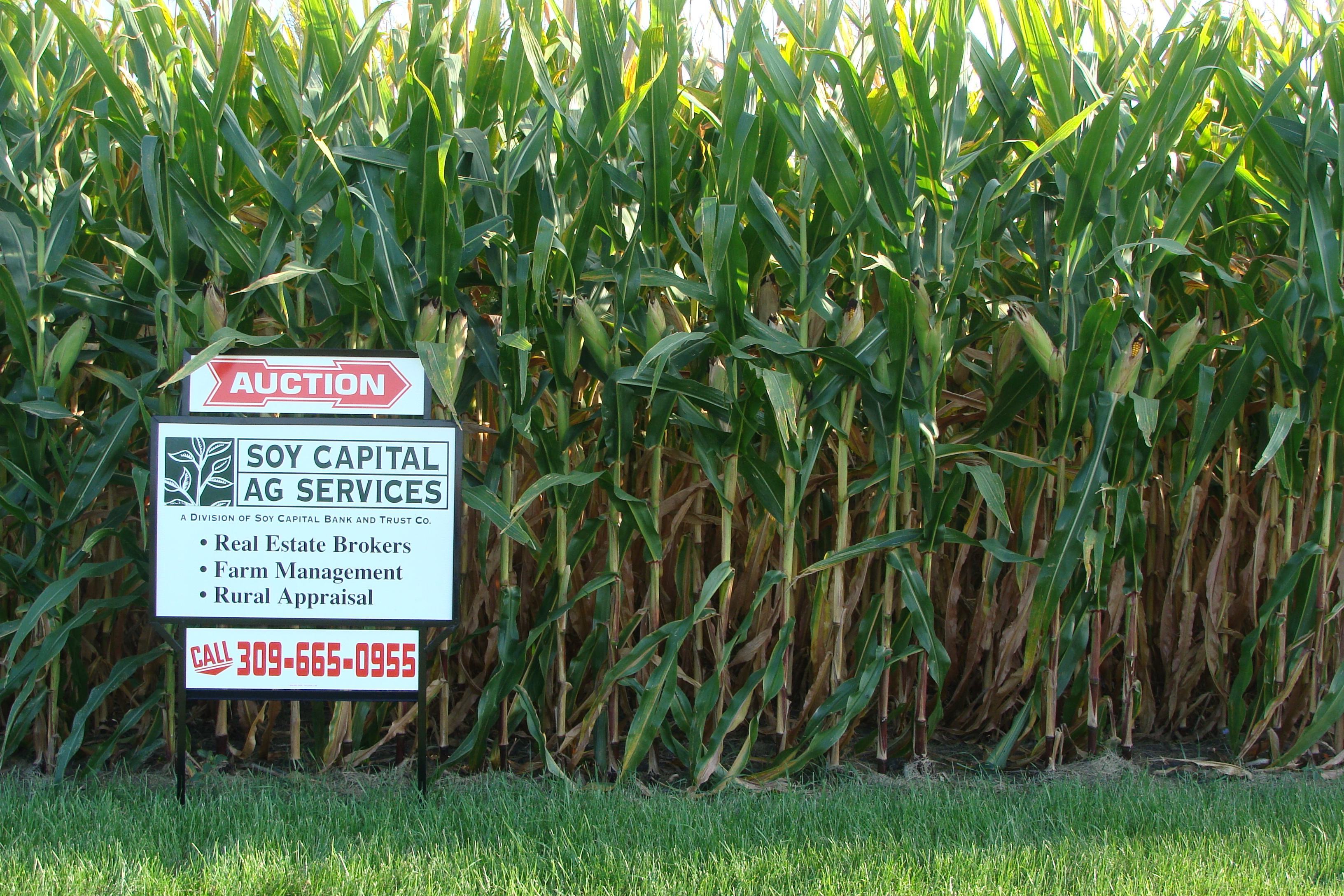 Picture of for sale sign on Streid farm.