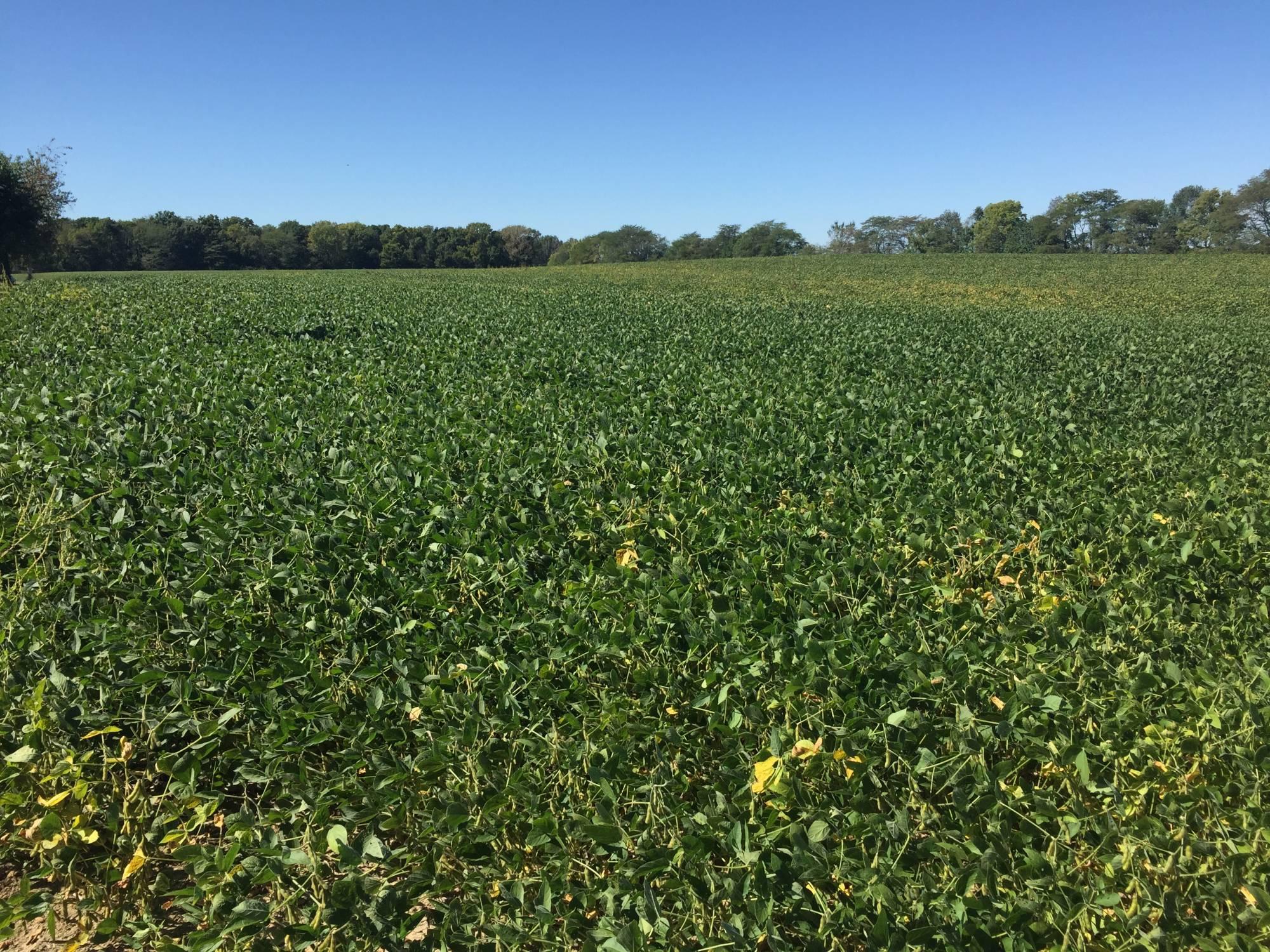 Illinois Farms for Sale