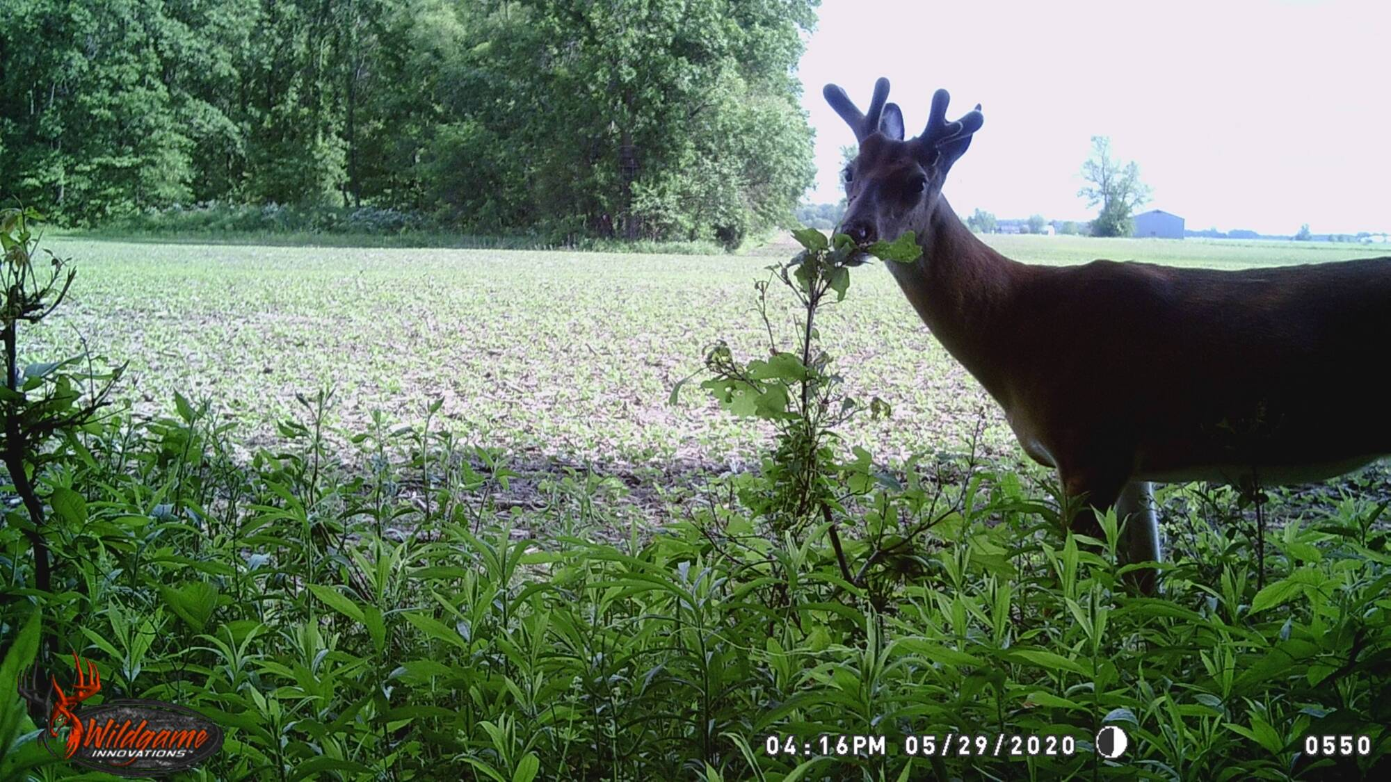 deer photo 1