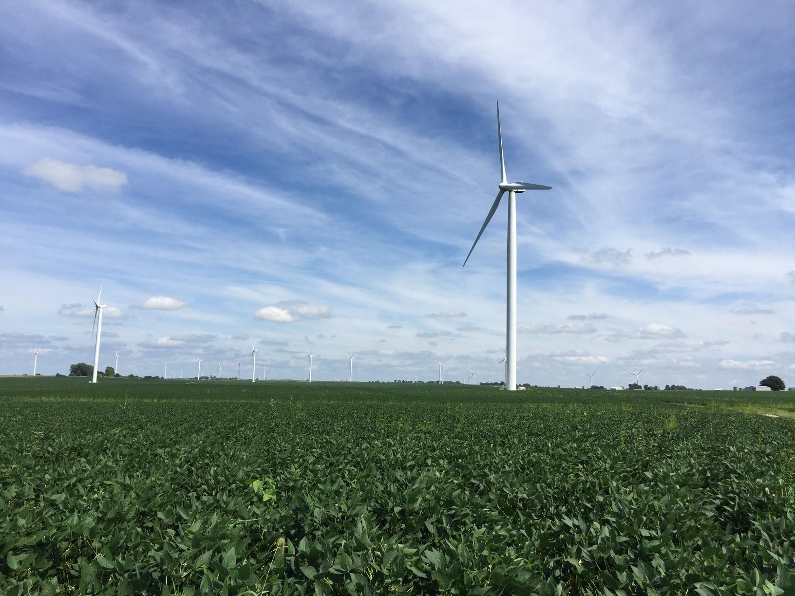 Windmills looking east across farm