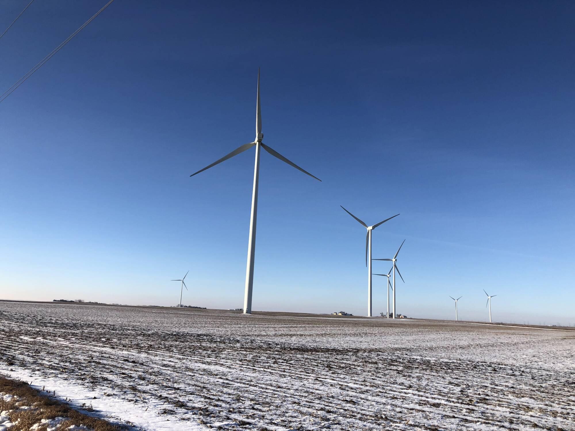Field of Windmills